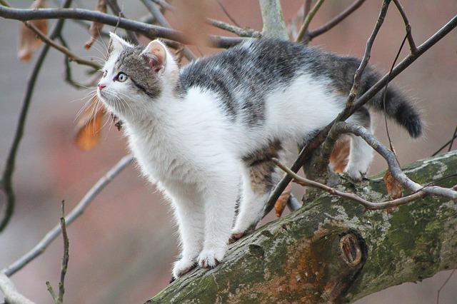 chat-arbre