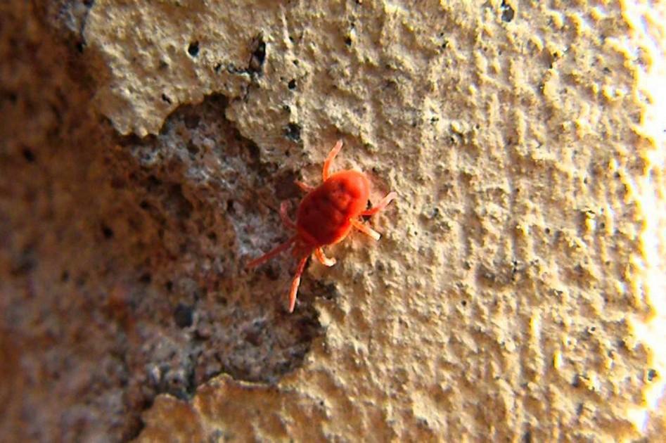 Trucs et astuces contre les insectes dans le jardin la for Astuces contre les fourmis dans la maison