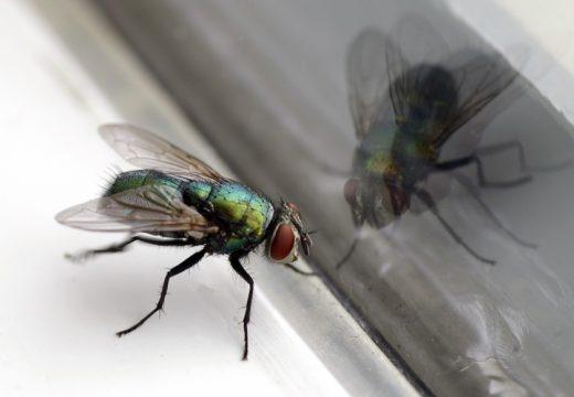 Trucs et astuces contre les insectes dans le jardin