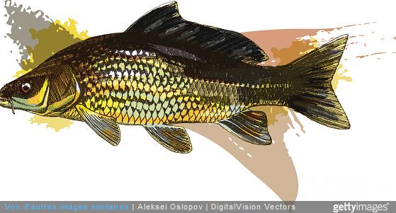 Pêche : la carpe peut-elle être consommée ?
